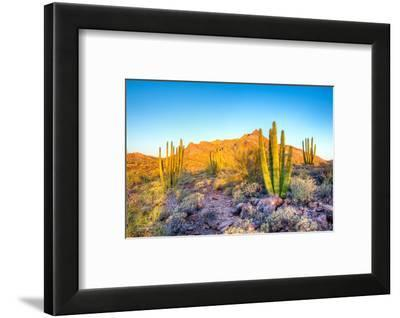 Whistling Organ Pipes-Anton Foltin-Framed Photographic Print
