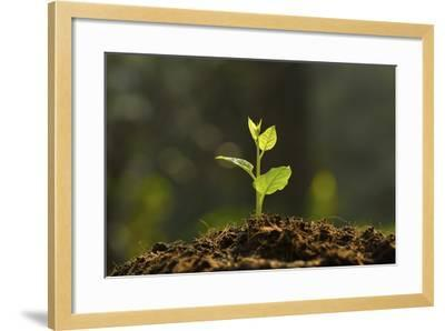Young Plant-amenic181-Framed Photographic Print