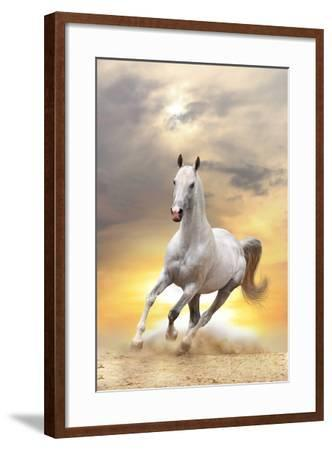 White Horse in Sunset-mari_art-Framed Photographic Print