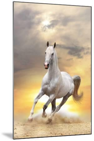 White Horse in Sunset-mari_art-Mounted Photographic Print