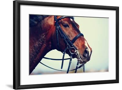 Portrait of A Sports Brown Horse.-AZALIA-Framed Photographic Print