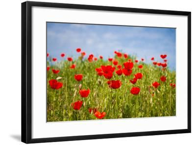 Poppy Landscape-artlosk-Framed Photographic Print