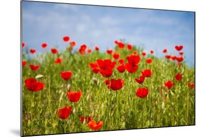 Poppy Landscape-artlosk-Mounted Photographic Print