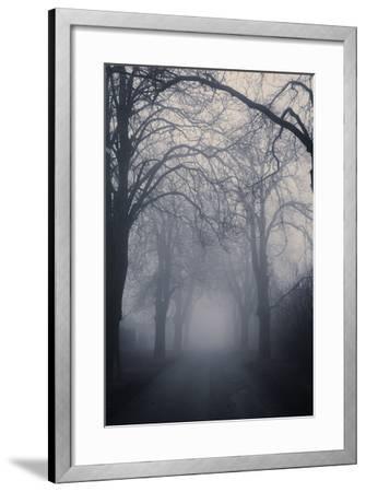 Straight Foggy Passage Surrounded by Dark Trees-vkovalcik-Framed Photographic Print