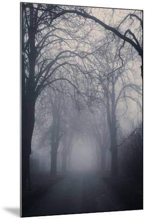 Straight Foggy Passage Surrounded by Dark Trees-vkovalcik-Mounted Photographic Print