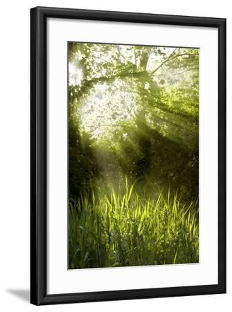 Shafts of Sunlight Shining through a Tree Top-fancyfocus-Framed Photographic Print