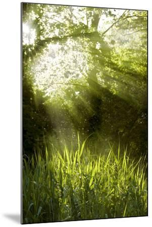 Shafts of Sunlight Shining through a Tree Top-fancyfocus-Mounted Photographic Print