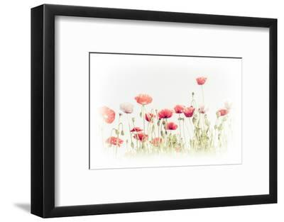 Abstract Floral Background in Vintage Style for Greeting Card. Wild Poppy Flowers on Summer Meadow.-Im Perfect Lazybones-Framed Photographic Print