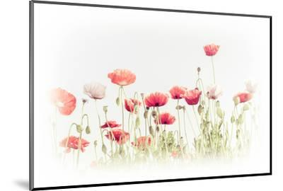 Abstract Floral Background in Vintage Style for Greeting Card. Wild Poppy Flowers on Summer Meadow.-Im Perfect Lazybones-Mounted Photographic Print