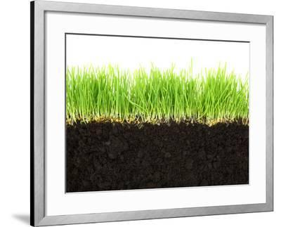 Cross-Section of Soil and Grass Isolated on White Background-viperagp-Framed Photographic Print