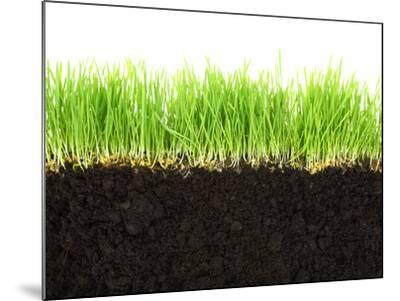 Cross-Section of Soil and Grass Isolated on White Background-viperagp-Mounted Photographic Print