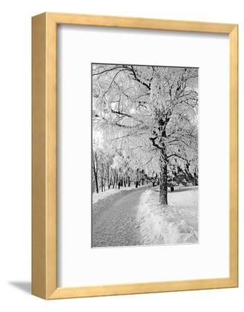 Lane in Town Park-basel101658-Framed Photographic Print