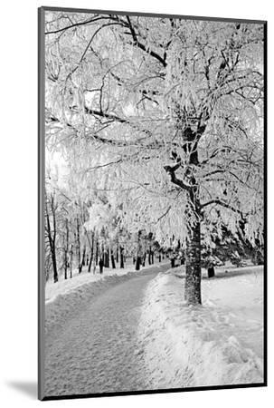 Lane in Town Park-basel101658-Mounted Photographic Print