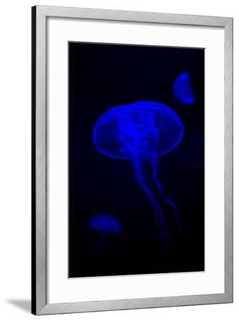 Glowing Jellyfish-Ella Nesteryuk-Framed Photographic Print