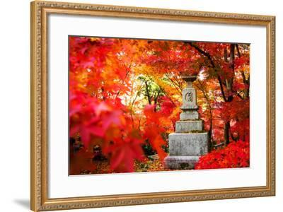 Autumn Japanese Garden with Maple-NicholasHan-Framed Photographic Print