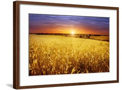 Colorful Sunset over Wheat Field.-Elenamiv-Framed Photographic Print