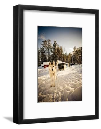 Husky Dog-Rebecca Lippett-Framed Photographic Print