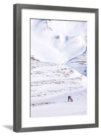 Reindeer-leaf-Framed Photographic Print
