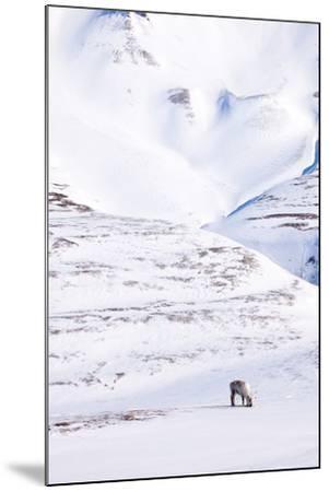 Reindeer-leaf-Mounted Photographic Print