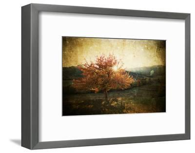 Lonely Beautiful Autumn Tree - Vintage Photo-melis-Framed Photographic Print