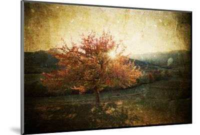 Lonely Beautiful Autumn Tree - Vintage Photo-melis-Mounted Photographic Print