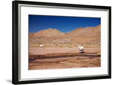 Lamas in Atacama Desert, Chile-Nataliya Hora-Framed Photographic Print