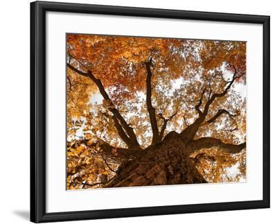 Oak-Schlegelfotos-Framed Photographic Print