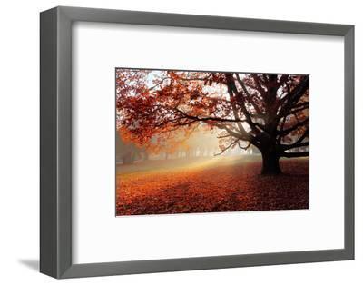 Alone Tree in Autumn Park-TTstudio-Framed Photographic Print
