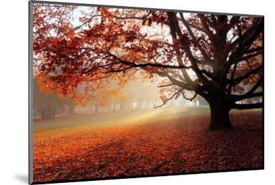 Alone Tree in Autumn Park-TTstudio-Mounted Photographic Print