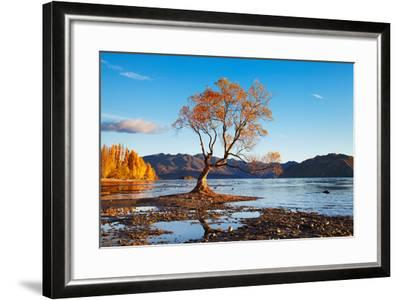 Autumn Landscape, Lake Wanaka, New Zealand-DmitryP-Framed Photographic Print