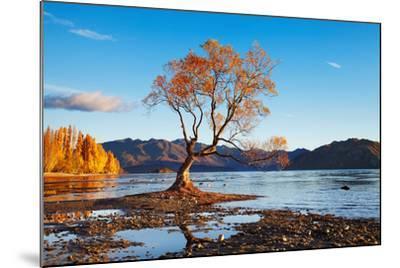 Autumn Landscape, Lake Wanaka, New Zealand-DmitryP-Mounted Photographic Print