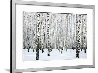 Winter Birch Forest-LeniKovaleva-Framed Photographic Print