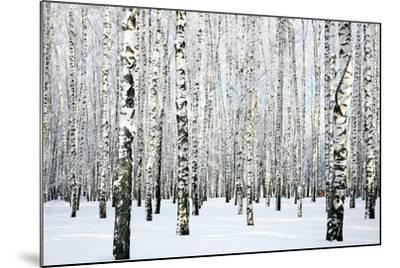 Winter Birch Forest-LeniKovaleva-Mounted Photographic Print