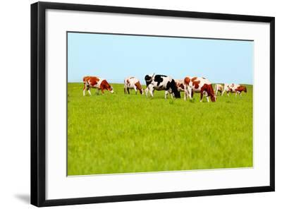 Cows Grazing on Pasture-Liang Zhang-Framed Photographic Print