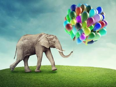 Elephant with a Colorful Balloons-egal-Photographic Print