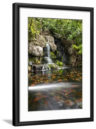 Koi Fish in Pond at the Garden with A Waterfall- luckypic-Framed Photographic Print