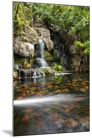 Koi Fish in Pond at the Garden with A Waterfall- luckypic-Mounted Photographic Print