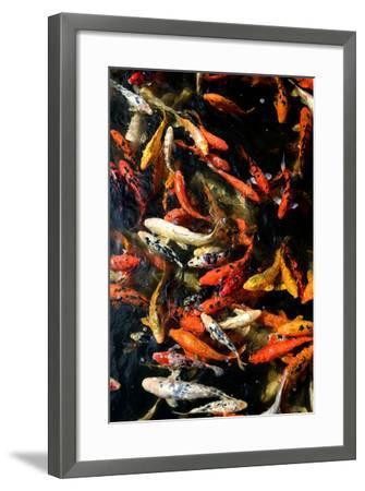 Cyprinus Carpio-only_fabrizio-Framed Photographic Print