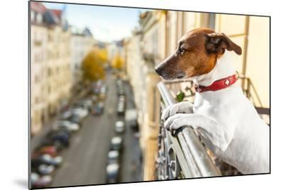 Nosy Watching Dog-Javier Brosch-Mounted Photographic Print
