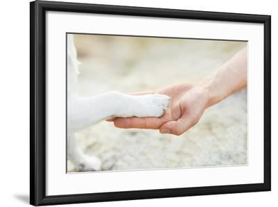 High Five Paw-Javier Brosch-Framed Photographic Print