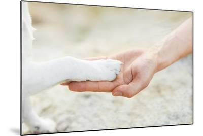 High Five Paw-Javier Brosch-Mounted Photographic Print
