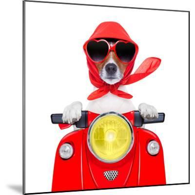 Motorcycle Dog Summer Dog-Javier Brosch-Mounted Photographic Print