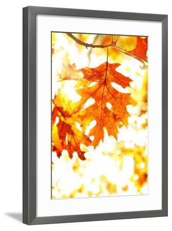 Colorful Autumn Leaves-soupstock-Framed Photographic Print