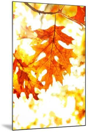 Colorful Autumn Leaves-soupstock-Mounted Photographic Print