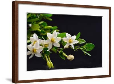 Gardenia Flower on Black-crystalfoto-Framed Photographic Print