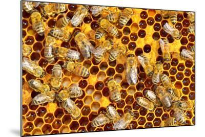 Working Bees on Honeycells-mady70-Mounted Photographic Print