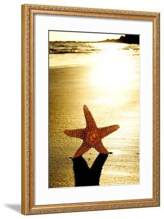 Seastar on the Shore of a Beach at Sunset-nito-Framed Photographic Print