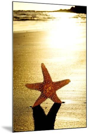 Seastar on the Shore of a Beach at Sunset-nito-Mounted Photographic Print