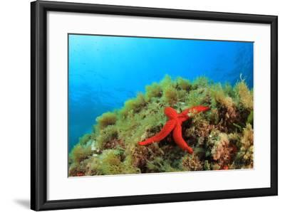 Starfish Underwater on Reef-Rich Carey-Framed Photographic Print