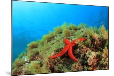 Starfish Underwater on Reef-Rich Carey-Mounted Photographic Print